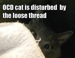 ocd-cat